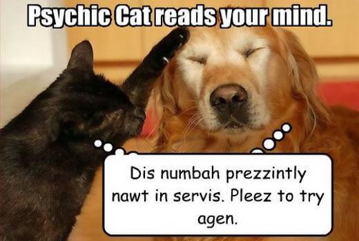 psychic lottery cat